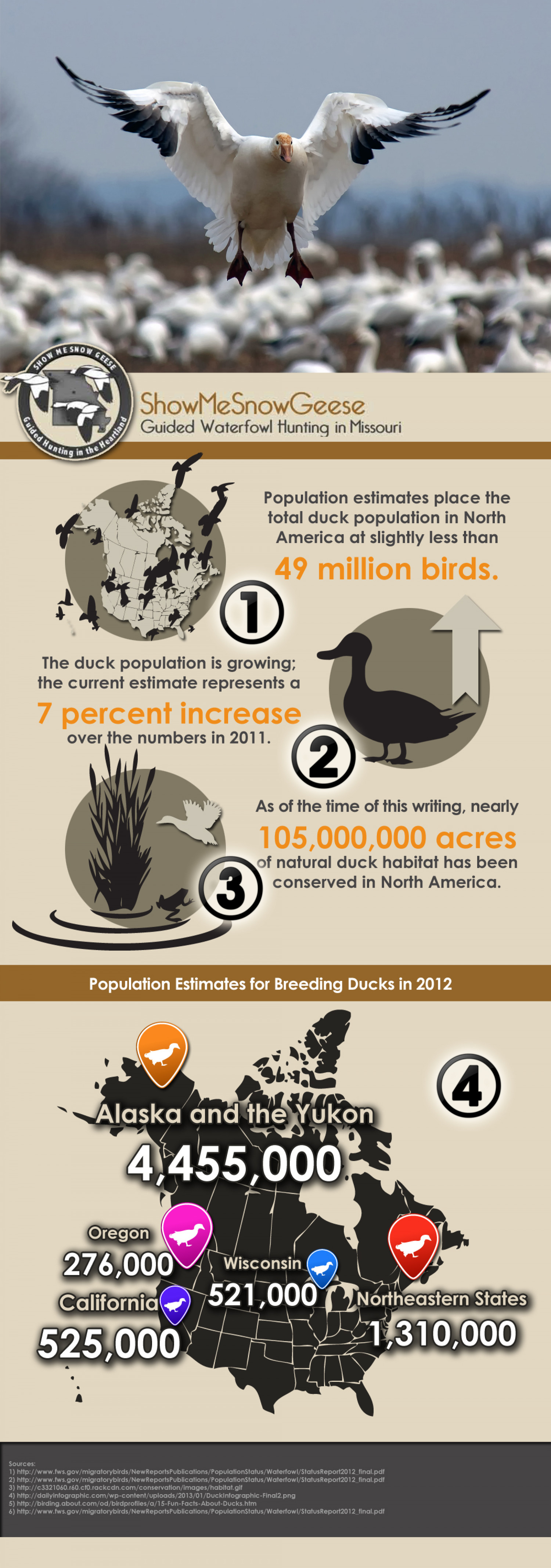 Interesting facts about geese Infographic