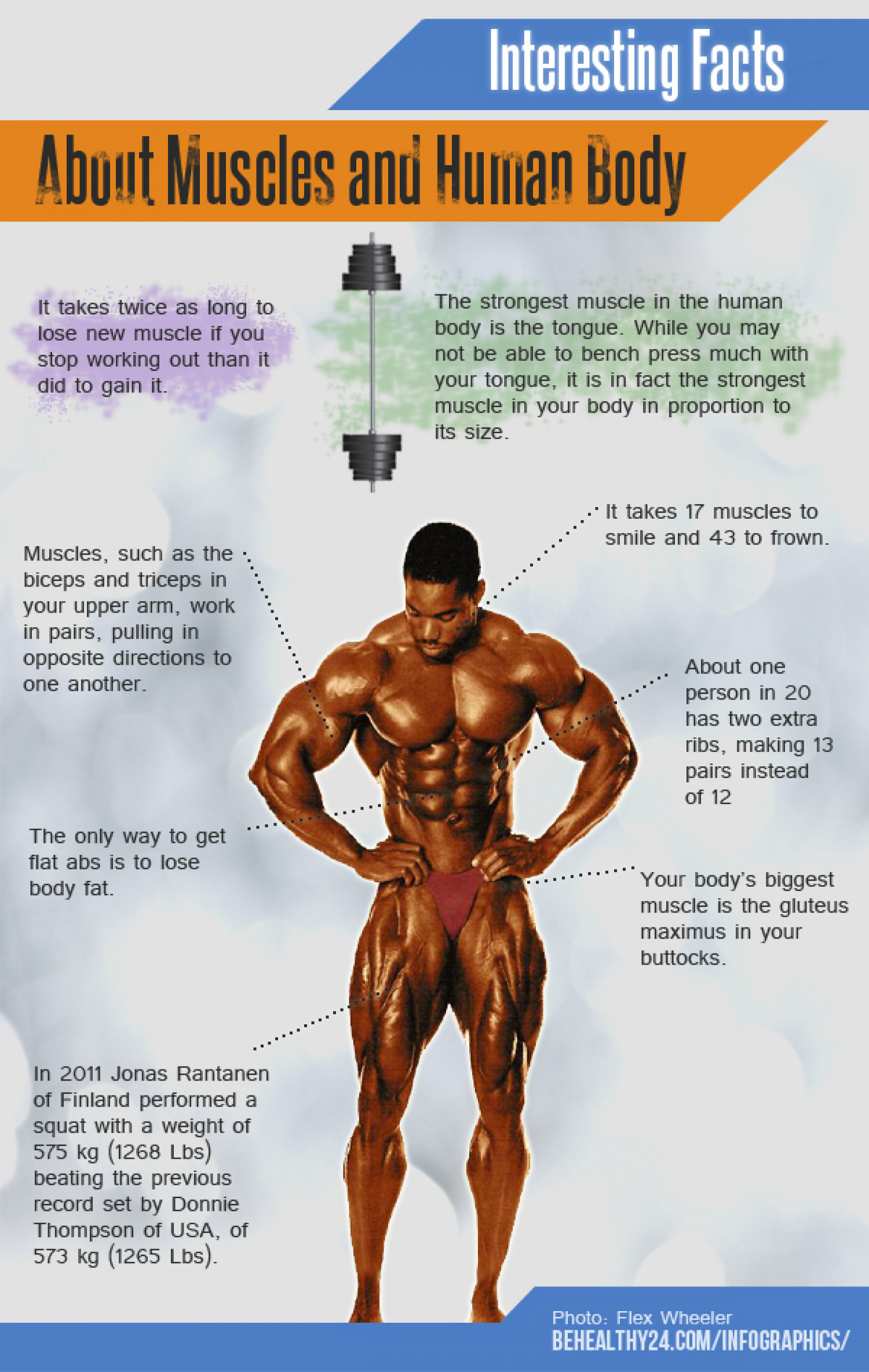 interesting facts about muscle and human body | visual.ly, Muscles