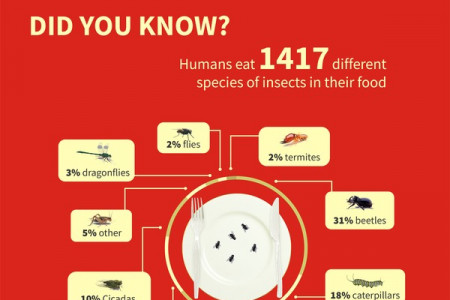 Interesting Pest Facts Infographic
