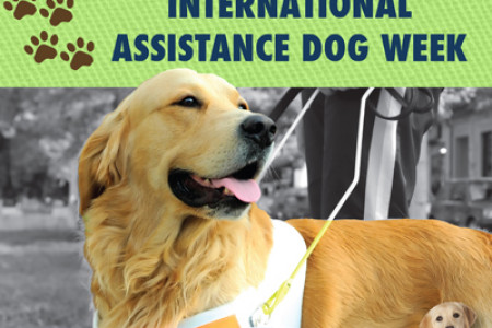 International Assistance Dog Week Infographic