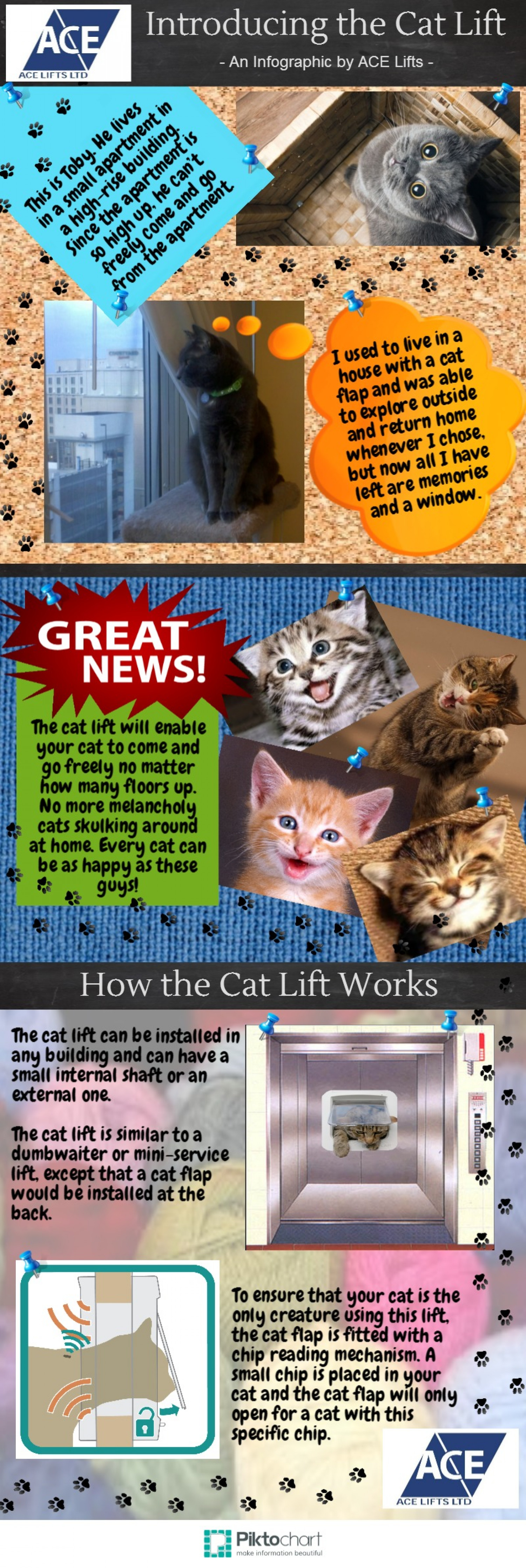 Introducing the Cat Lift Infographic