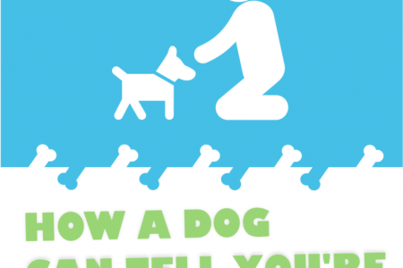 Introducing your Dog to your Baby Infographic