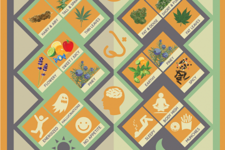 Is it Indica or Sativa? A visual Guide Infographic