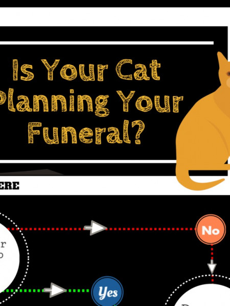Is Your Cat Planning Your Funeral? Infographic