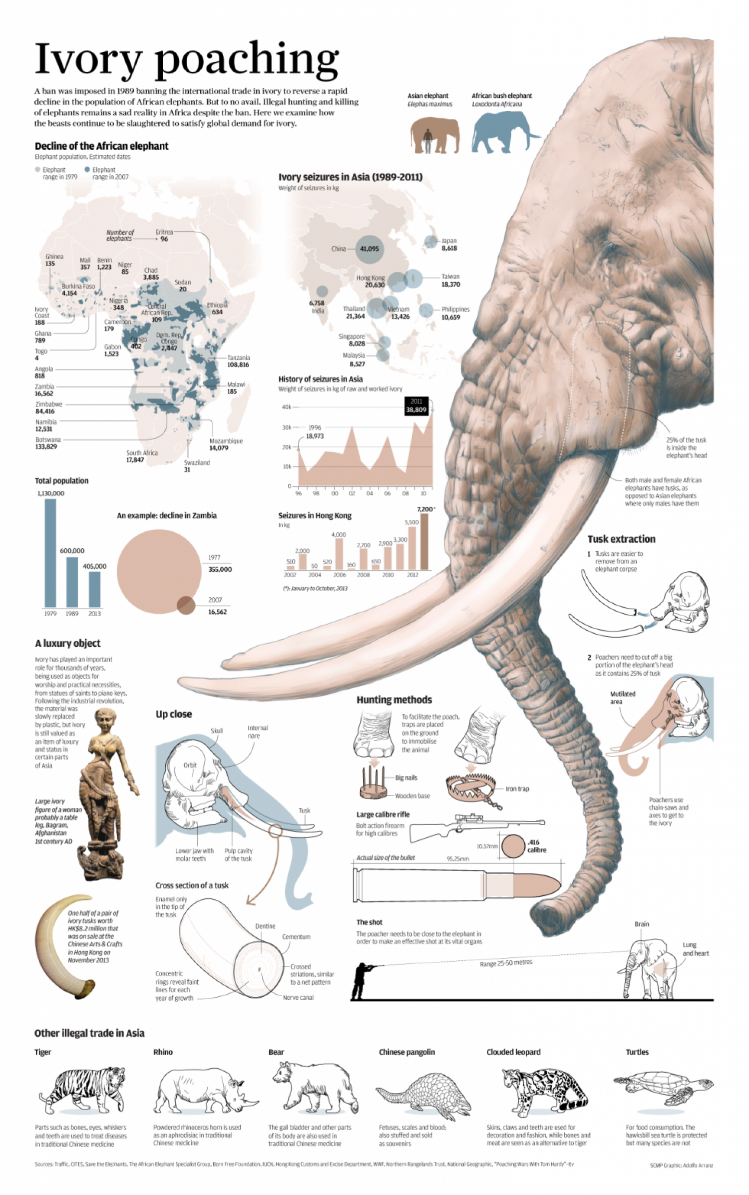Ivory Poaching Infographic