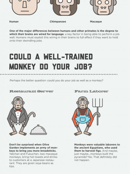Jobs Market of the Apes Infographic