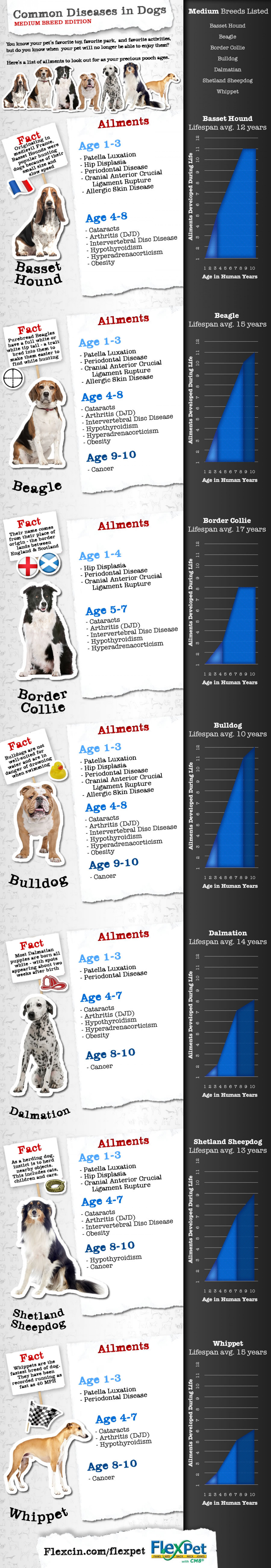 Joint Pain and Other Diseases in Medium Dog Breeds Infographic