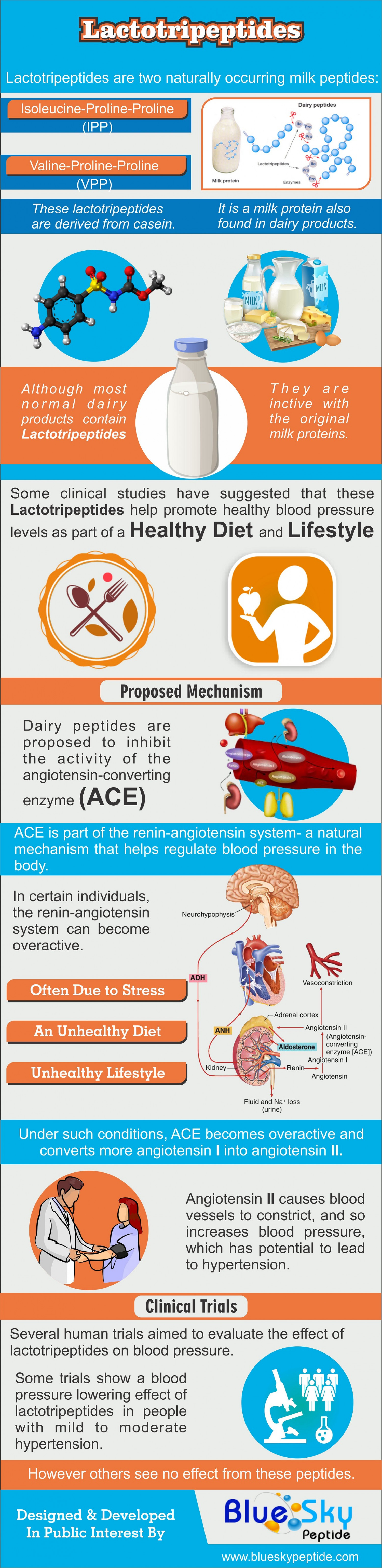 Lactotripeptides Infographic