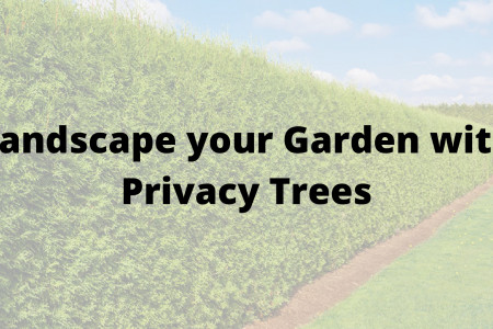 Landscape your Garden with Privacy Trees Infographic