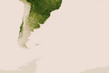 Latin American vegetation  Infographic
