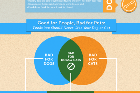 Learn the Truth about the Differences between Cats and Dogs Infographic