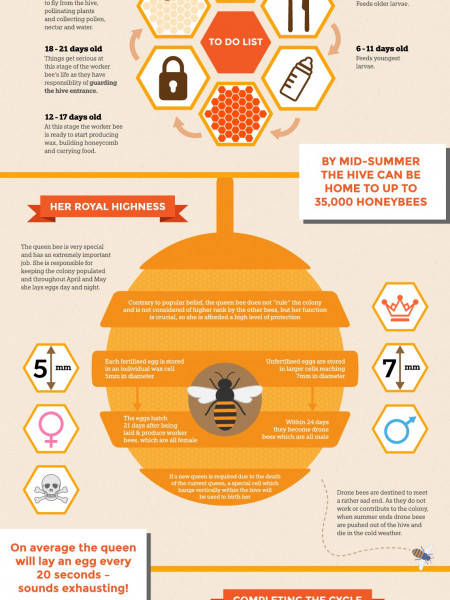 Behind Closed Doors - Life in the Hive Infographic