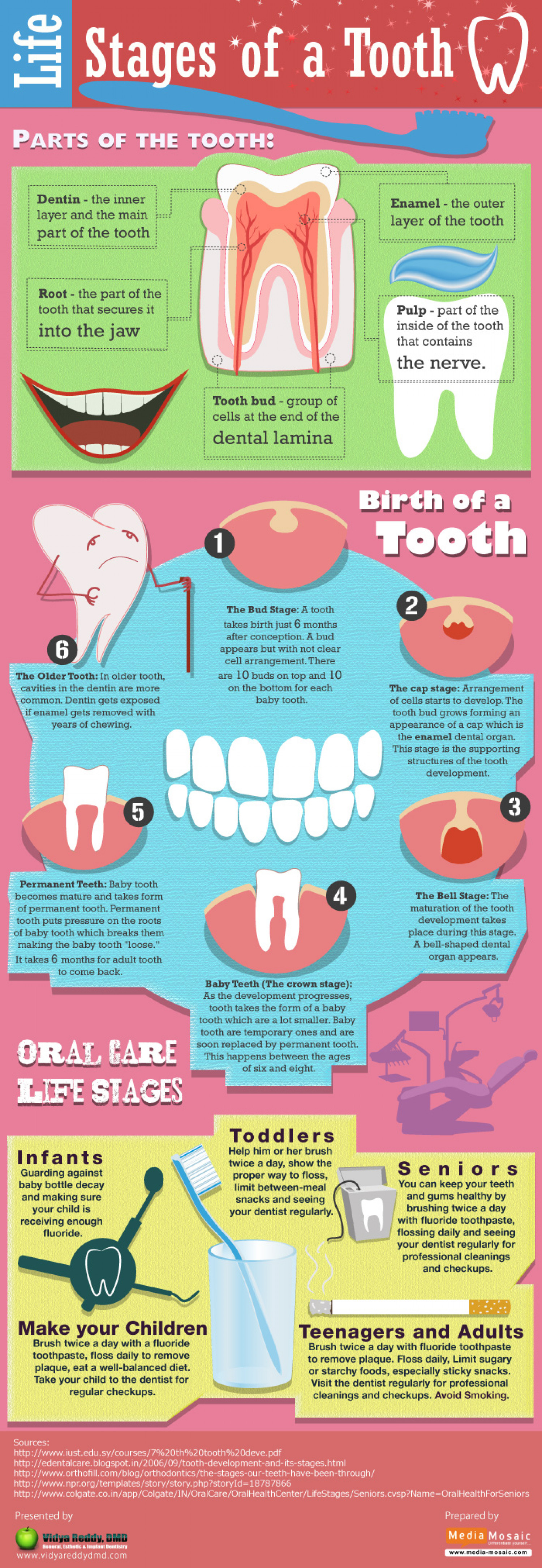 Life Stages of a Tooth Infographic