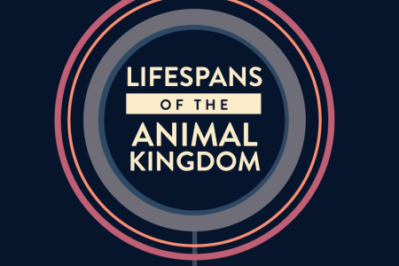 Lifespans of the Animal Kingdom Infographic