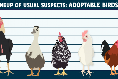 Lineup of Usual Suspects: Adoptable Birds Infographic