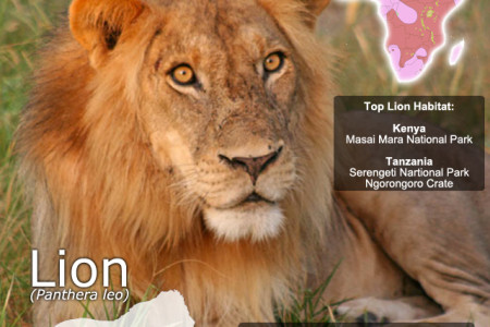 Lion SnapFacts Infographic