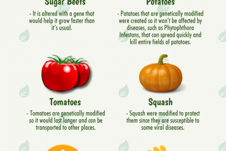 List of Genetically Modified Foods You Should Start Avoiding Now! Infographic
