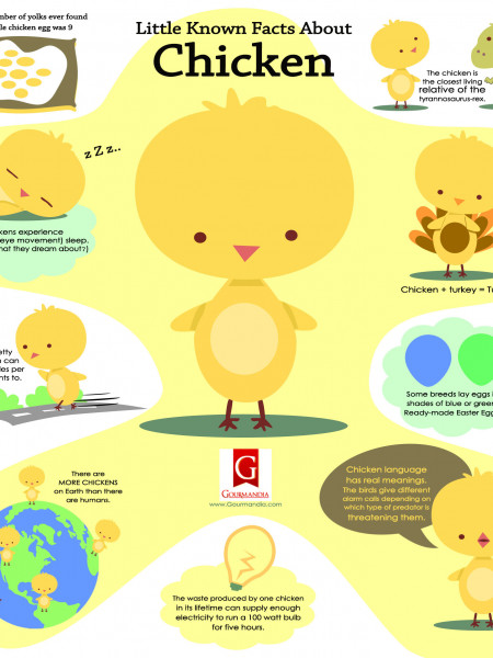 Little Known Facts About Chicken Infographic