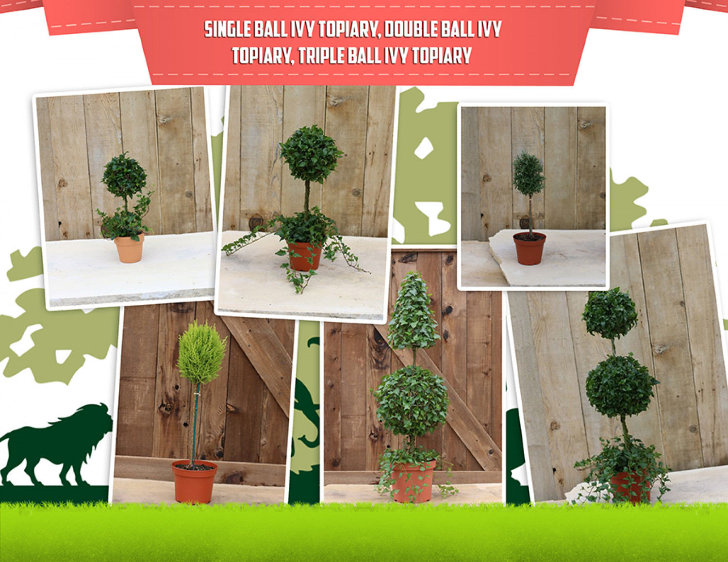 Live Ball Topiary Plants Infographic