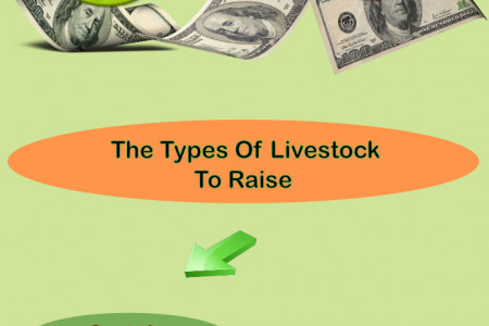 Livestock That Is Suitable To Be Raised By A Beginner Infographic