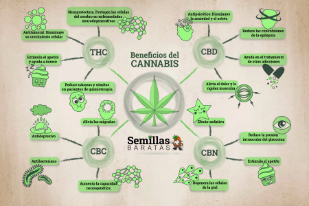 Los beneficios del Cannabis Infographic