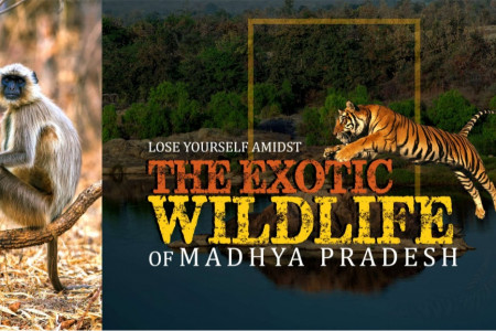Lose Yourself Amidst The Exotic Wilfdlife Of Madhya Pradesh Infographic