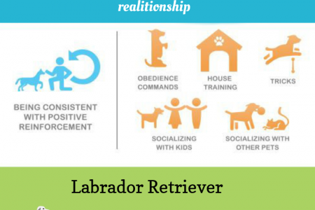 Lovable Family Labs Ready For Sale Infographic
