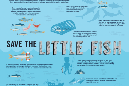 Love the Little Fish Infographic