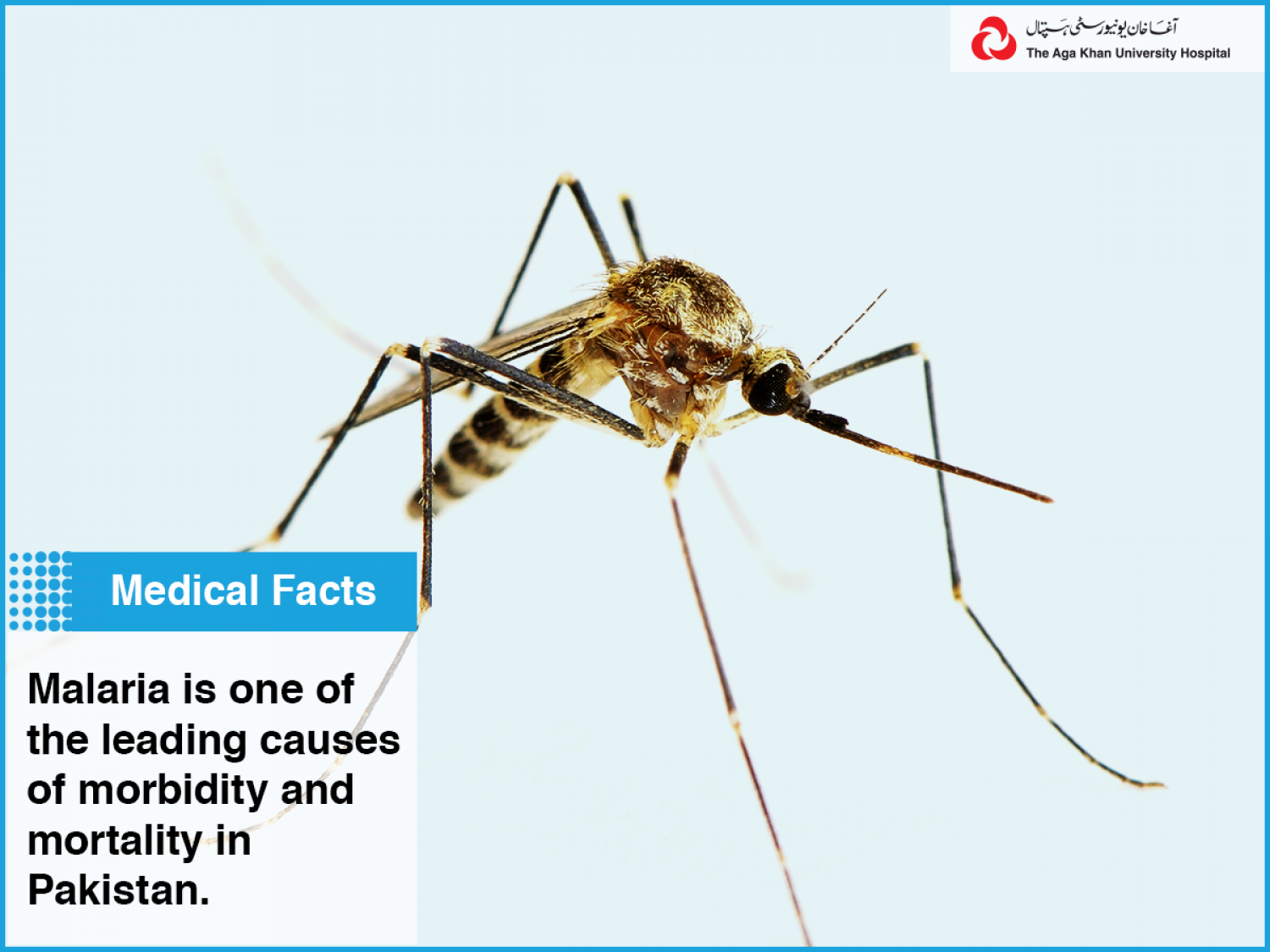 Malaria is one of the leading causes of morbidity and mortality in Pakistan. Infographic