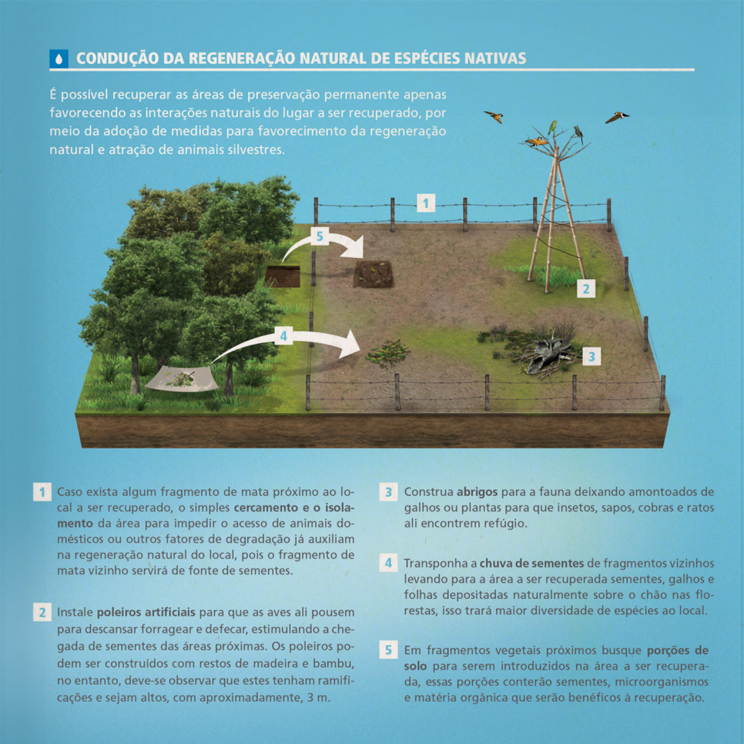 Managed natural regeneration of native species Infographic