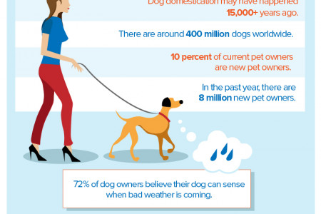 Man's Best Friend Infographic