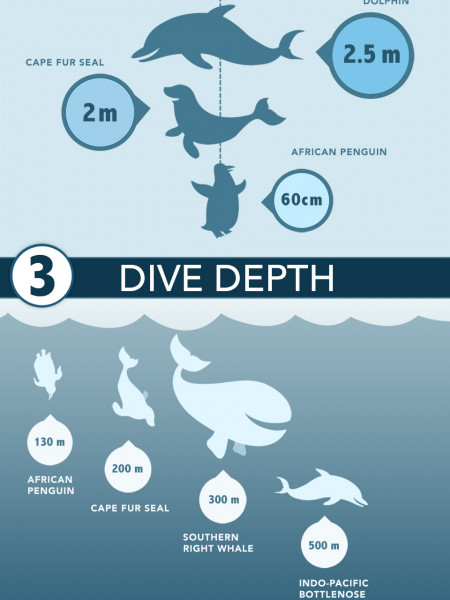 Marine Big 5 Infographic