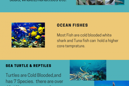 Marine Life-Friend of the sea. Infographic