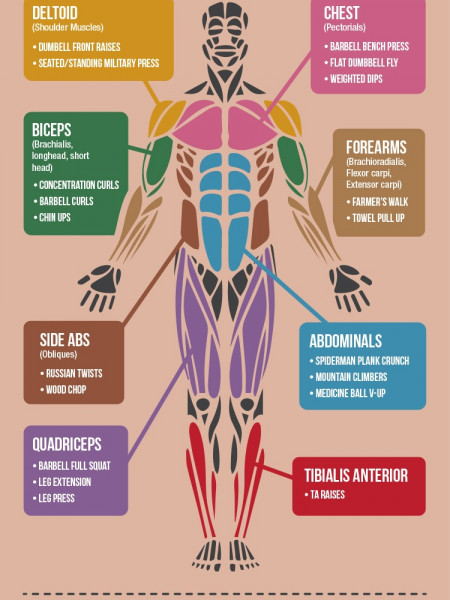 Master Your Muscles: Optimise Your Workout Infographic
