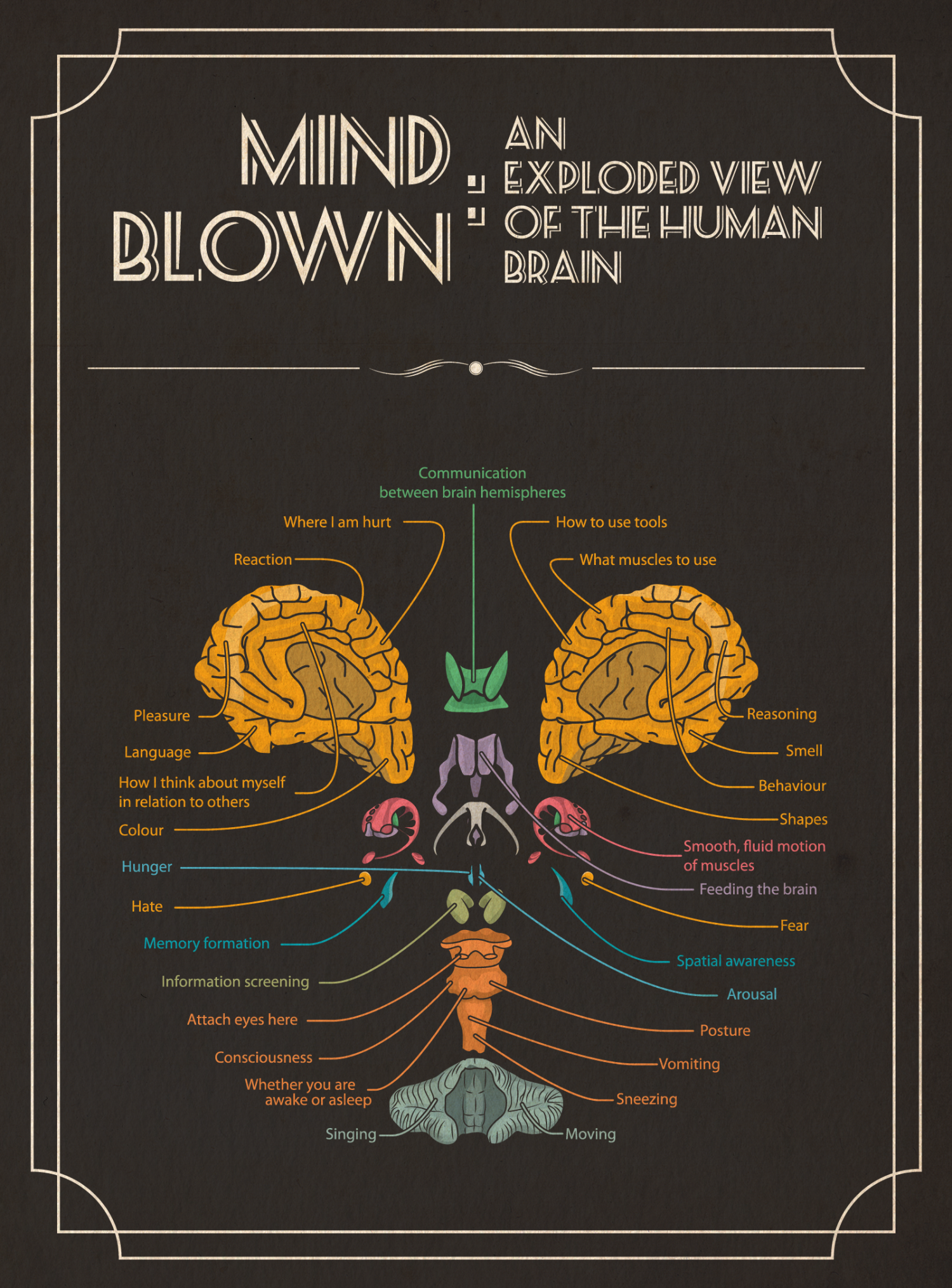 Mind Blown: An Exploded View of The Human Brain Infographic