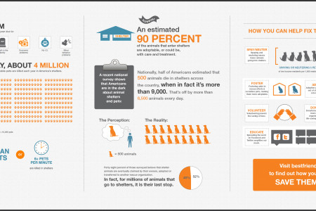 Misconceptions about Shelter Pets Infographic