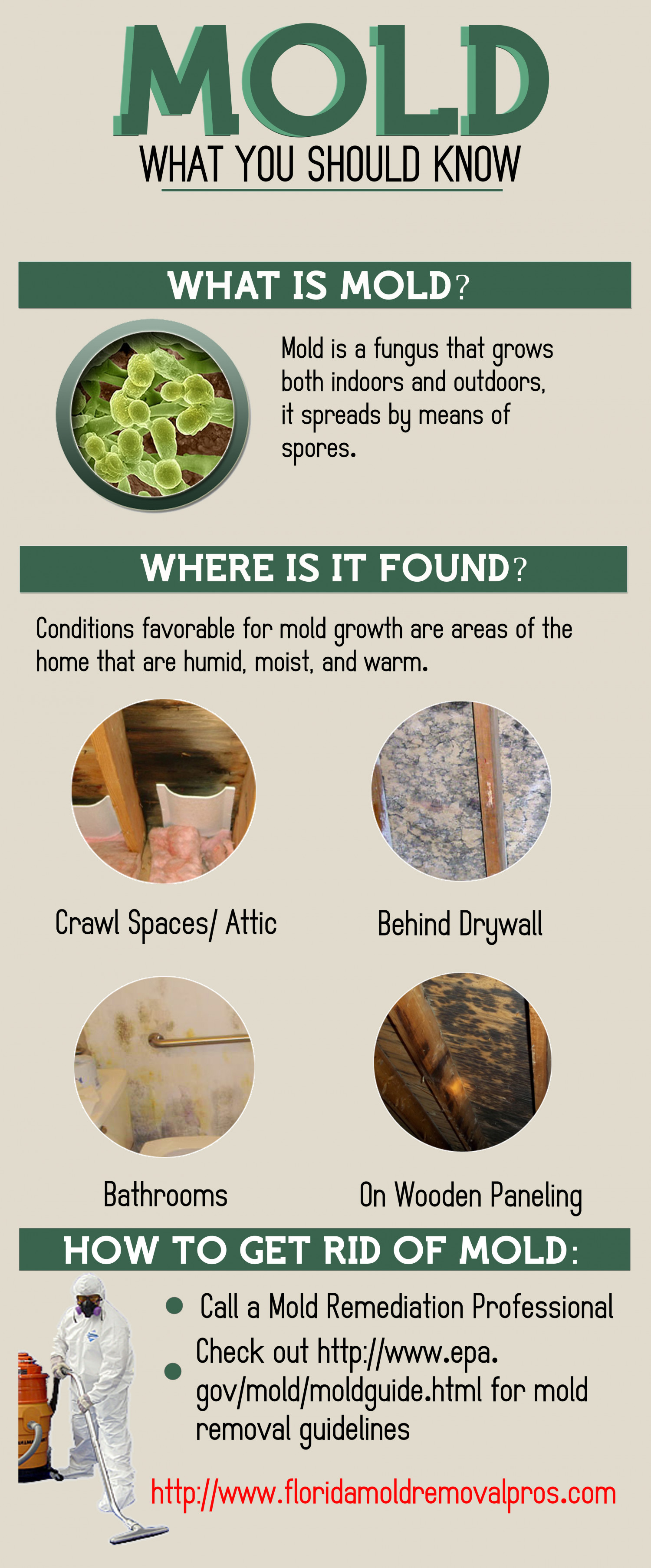 Mold What You Should Know Infographic
