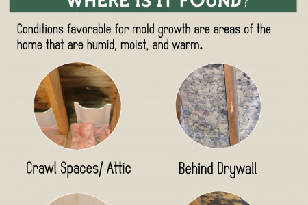 Mold - What You Should Know Infographic