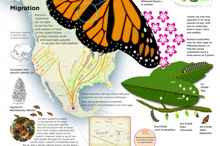 Monarch Butterfly Journey Infographic