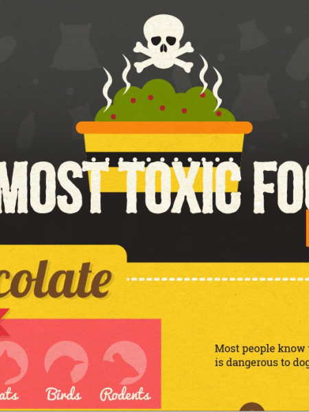The 10 Most Toxic Foods For Pets Infographic