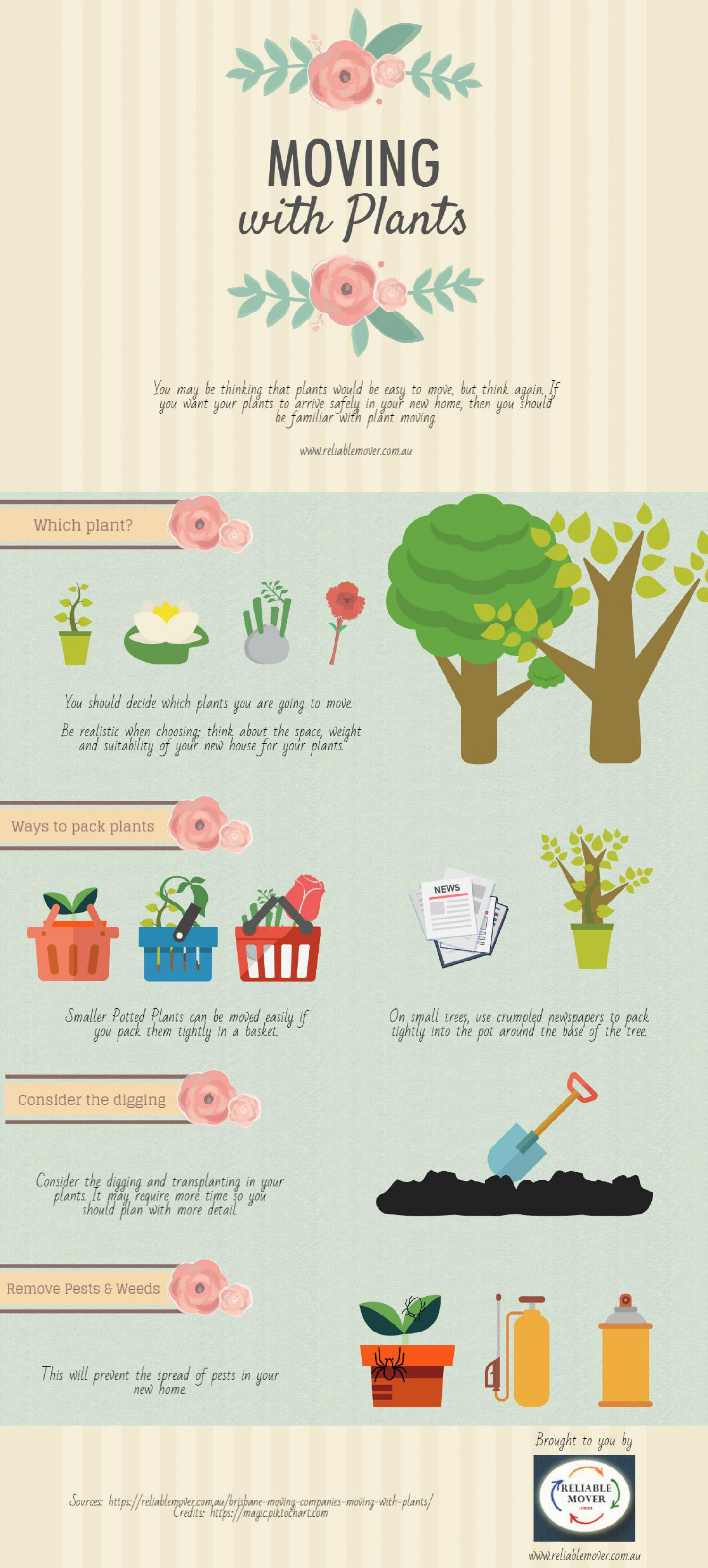 Moving with Plants Infographic