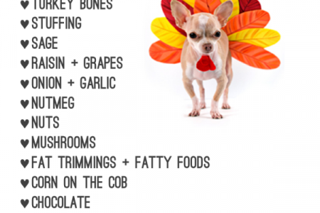 My Pet Tips Infographic