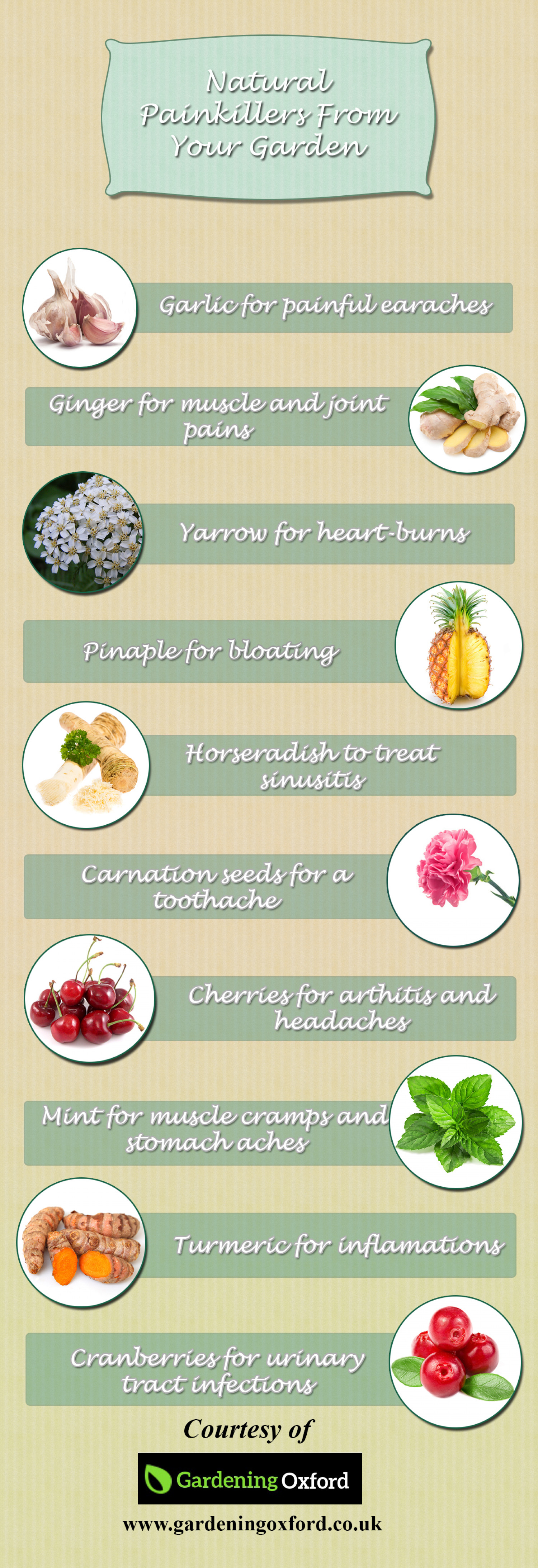 Natural Painkillers From Your Garden Infographic