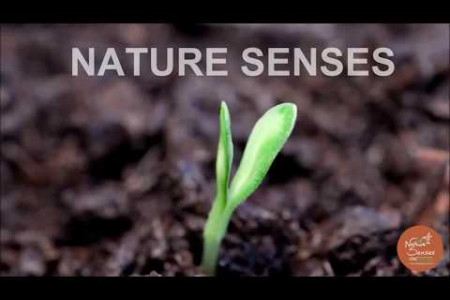 Nature Senses invites you to a world of nature and peace… Infographic
