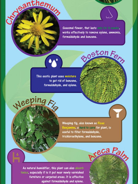 Need Fresh Air? Get Indoor Plants Infographic