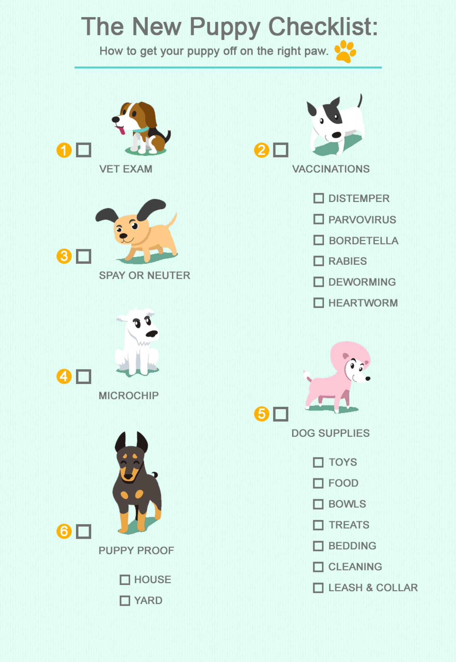 New Puppy Infographic Infographic