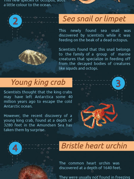 New Species in Antarctica Infographic