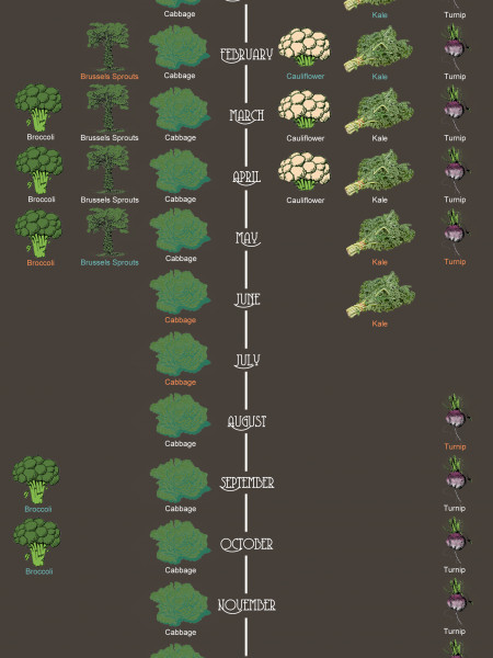 New Zealand Brassica Planting Calendar Infographic