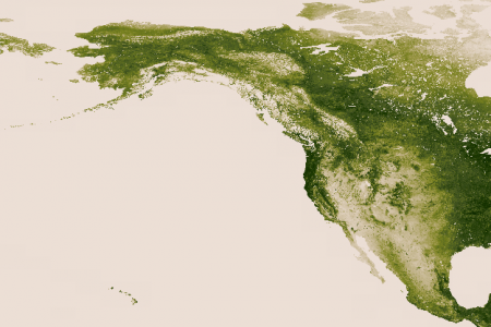 North American vegetation  Infographic