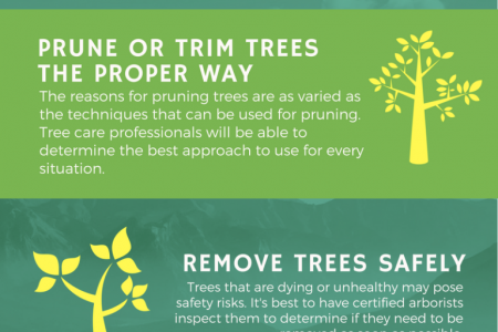 North Star Tree Service Infographic